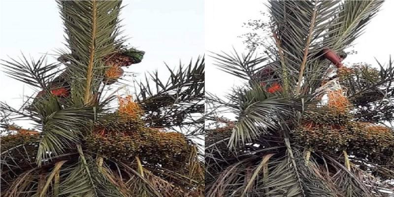 খুলনার বটিয়াঘাটার রাজবাধ গ্রামে ঐতিহ্যবাহী শ্রী শ্রী চড়ক পূজা সম্পন্ন॥