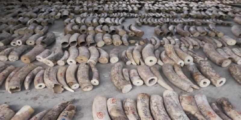 বন্যপ্রানীদের জীবন রক্ষায় প্রায় ৯ টন হাতির দাঁত ধ্বংস করছে সিঙ্গাপুরে॥